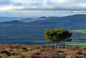 Churchstoke hills