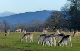 Deer and Wrekin