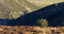Moorland tree