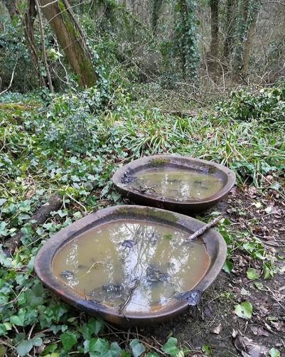 Dem bowls