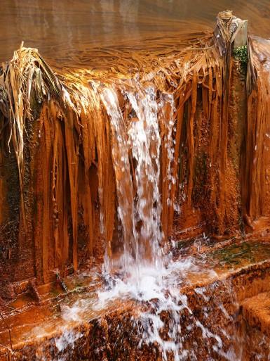 Rusty reeds
