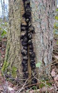 Woodland curiosity