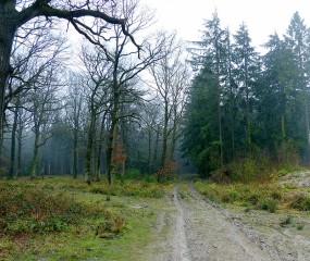 Muddy woods