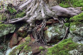 More roots
