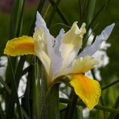 ...and an iris