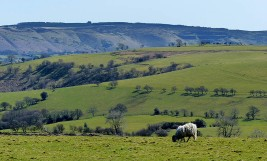 Sheep and Long Mynd