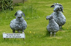 Do not sit on the sheep