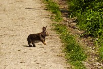 Rabbit in the lane