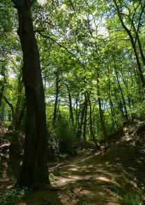 Light and shade in the woods