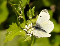 ...and a small white