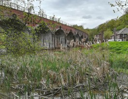 Reed mace and viaduct