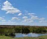 The pond...