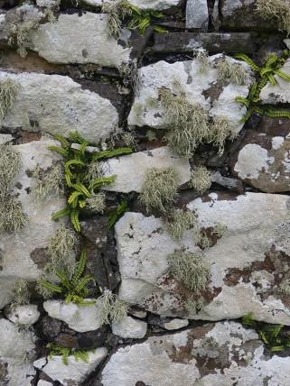 Lichen on its walls