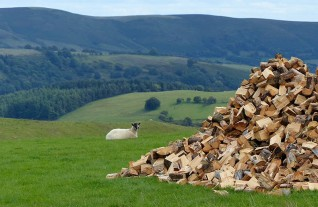 A cairn of wood
