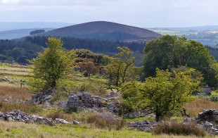 Trees and Heath Mynd