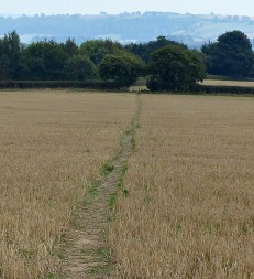 Path through the stubble
