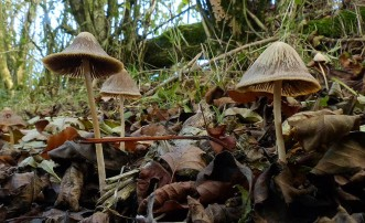 Toadstools on the track