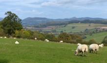 Sheepy pastures