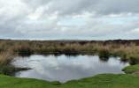 The pond on the Mynd
