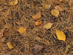 Leaves and larch needles