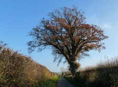 Tree in the lane