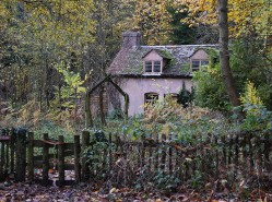 Cottage in a wood