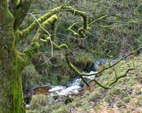 Tree and stream