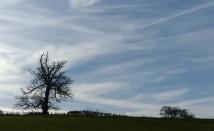 Cirrus skies