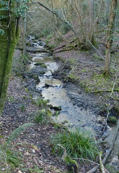 A jungle stream