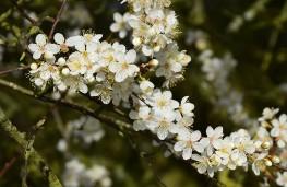 Blossom beside the bypass
