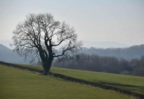 February fields