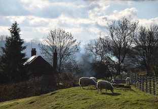 Sheep and smoke