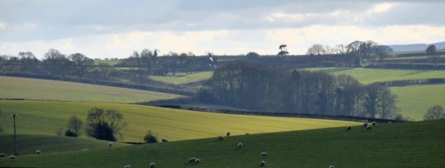 Zig-zag landscape