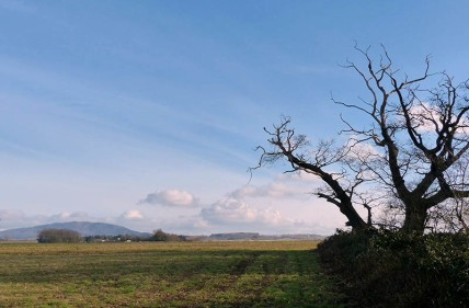 Oldest tree and the Wrekin