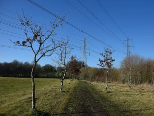 Pylons and trees