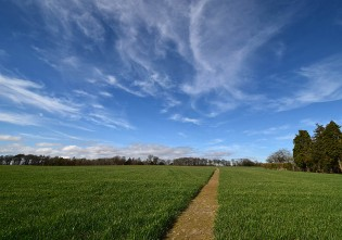 Footpath through the field