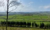 Green fields below