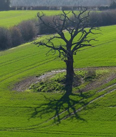 Tree and shadow