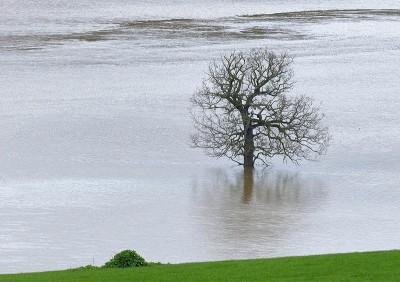 Tree with wet feet