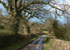 ... along the lane
