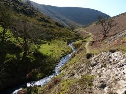 Beside the stream