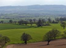 View from the top - Mortimer Forest