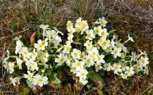 Springtime on Skye