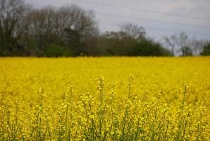 More sunshine fields