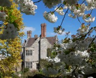Benthall blossom 2