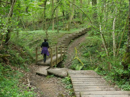 Wooden path through woodland