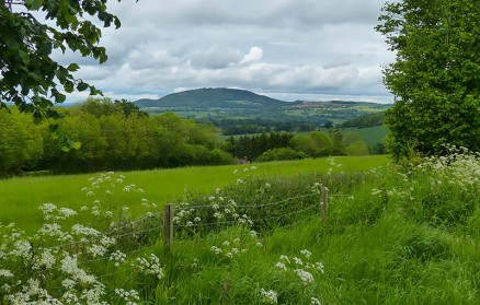 Cow parsley and the Wrekin