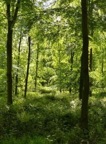 Deciduous woods