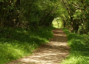 A green tunnel