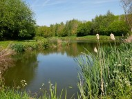 Fishing pools at Hurst Farm